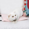 Pet Electric Blanket Waterproof Heating Pads For Cats Winter Series Size S/M/L Dog Puppy Pets Bed Warm Cat Supplies Pet Products 3